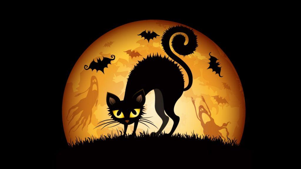 Многие приюты в США не позволяют забирать черных кошек во время Хэллоуина. Это в большей степени связано с тем, что они опасаются о дальнейшей судьбе животных, которые могут стать жертвой пыток или жертвоприношений.